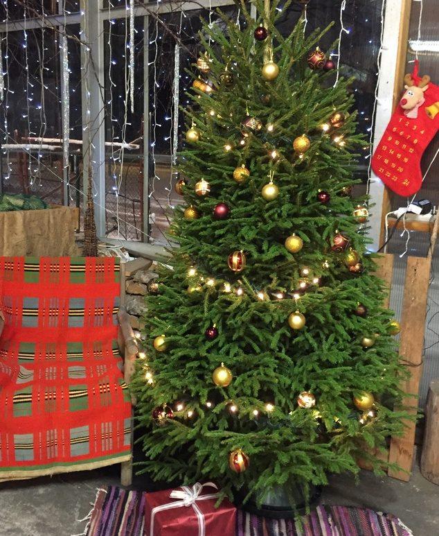 Jõulupuud