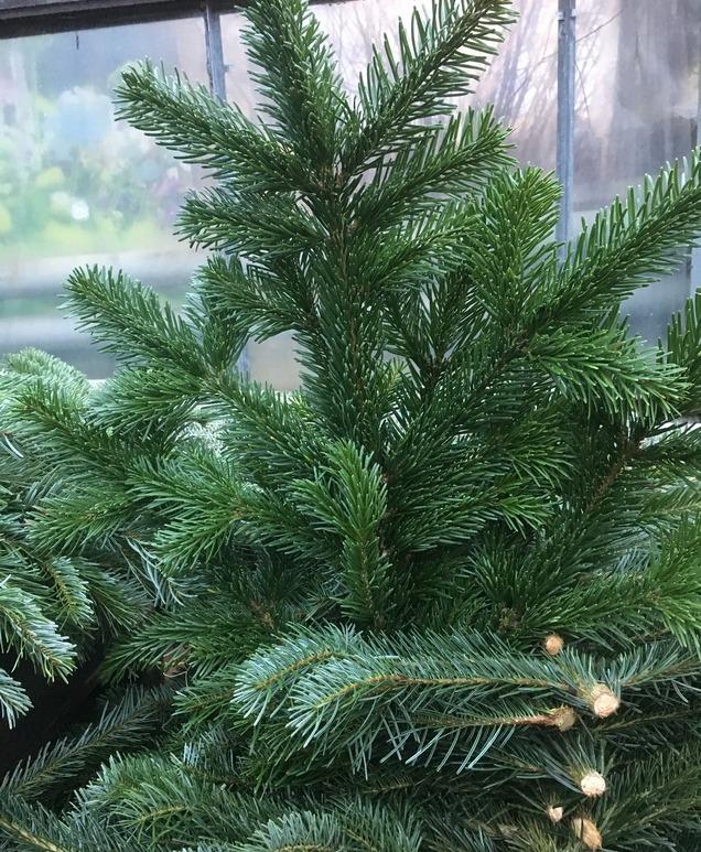 28. nov saabuvad jõulupuud
